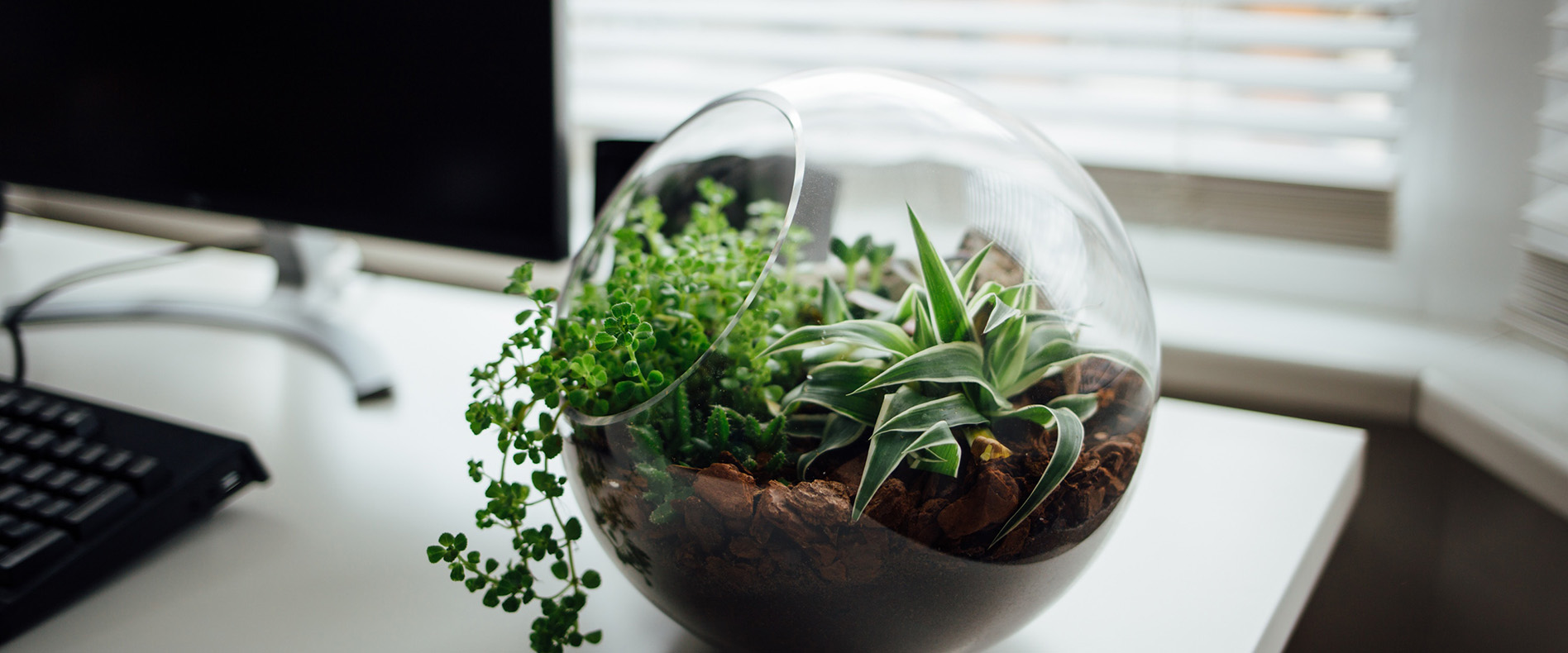Terrarium filled with plants