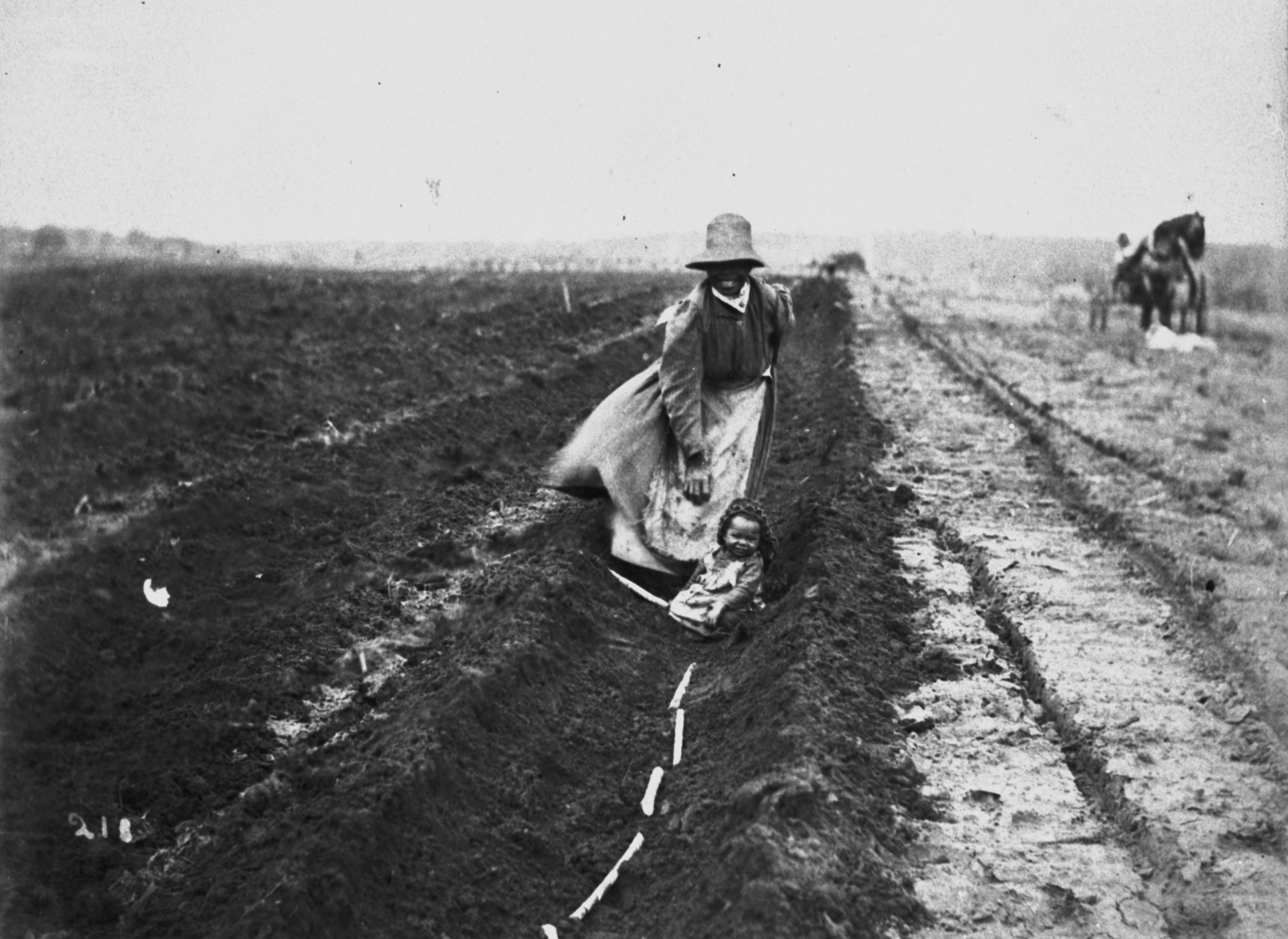 South Sea Islander woman planting sugar cane in a field c1897