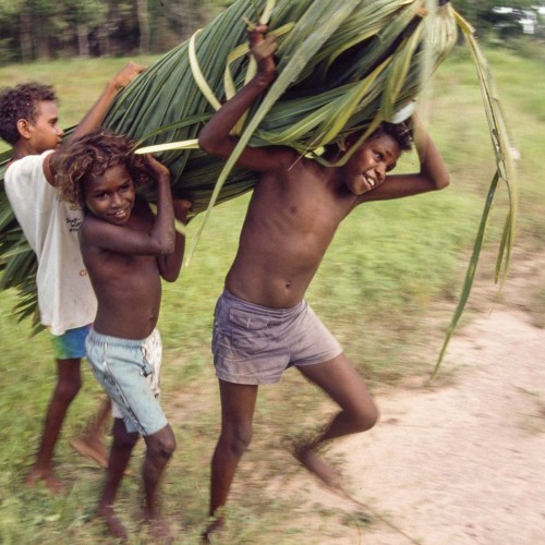 Boys carrying a bundle cabbage palm leaves