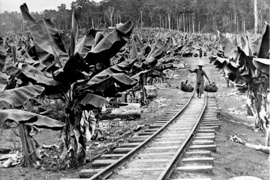Chinese workers carrying bananas to a train, near Innisfail