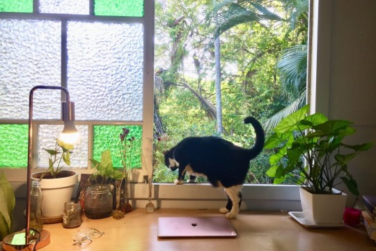 A desk facing out to an open window A laptop sits on the desk and a black-and-white cat peers out of the window