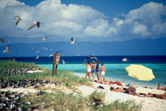People swimming near sea birds on Michaelmas Cay part of the Great Barrier Reef 1987
