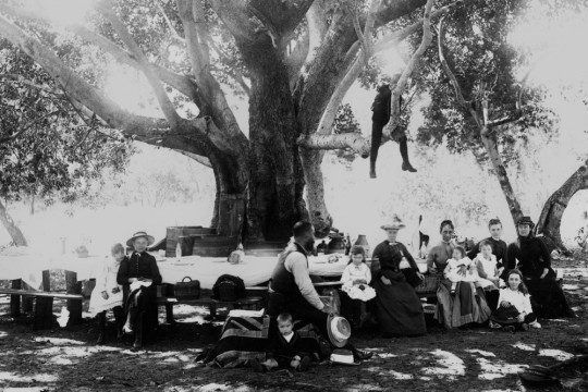 Family enjoying in a picnic at a long table under the shade of a large tree in the 1880s