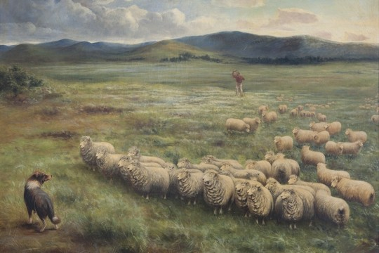 Anthony Alder 1838  1915 Lincoln sheep Homeward Laddie 1895 Oil on canvas 109 x 135 cm John Oxley Library State Library of Queensland ACC 28082