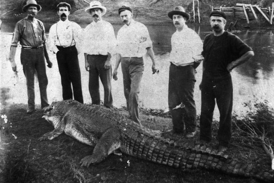 Six locals pose behind caught crocodile on river bank