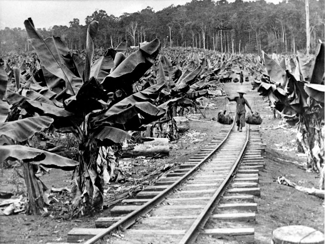 Image of Chinese workers carrying bananas to a train near Innisfail
