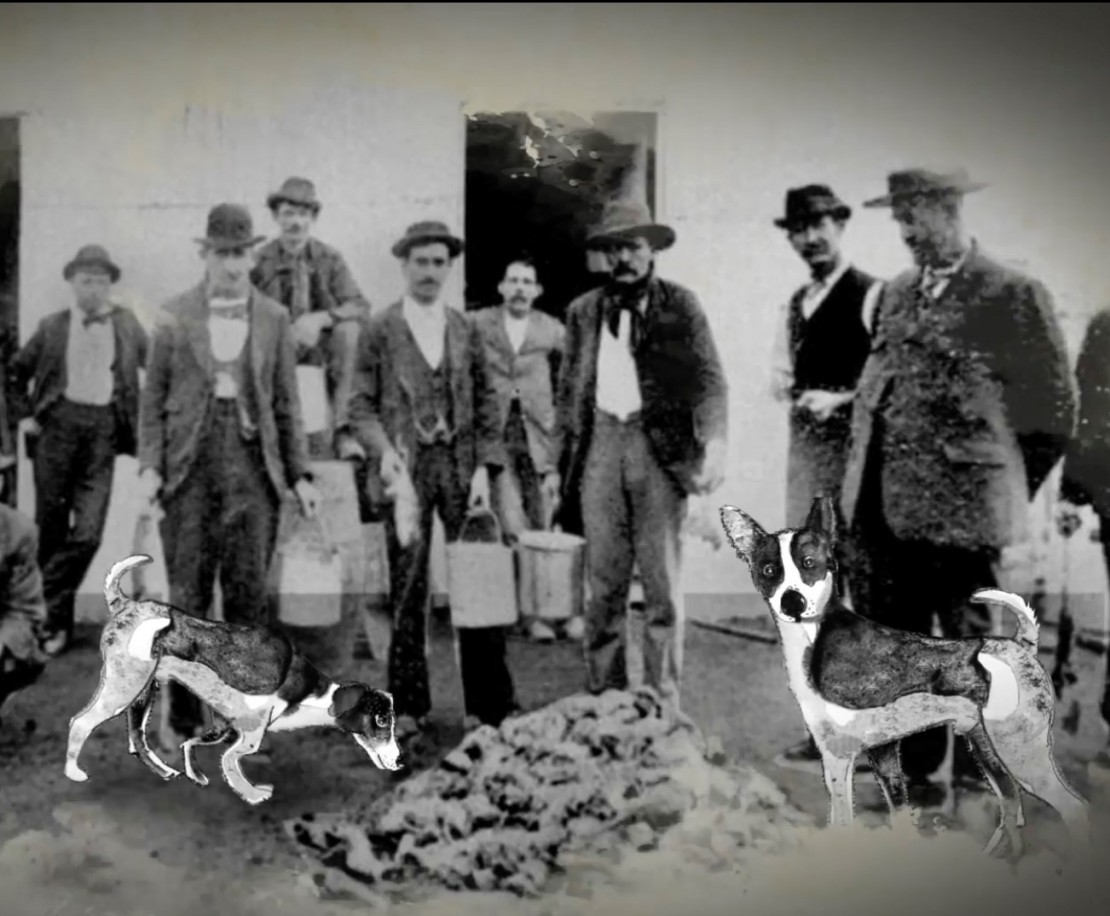 A group of men and two dogs crowded around a pile of rats