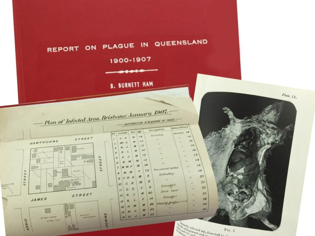 Documents including a picture of a rat that are about the plague in Queensland