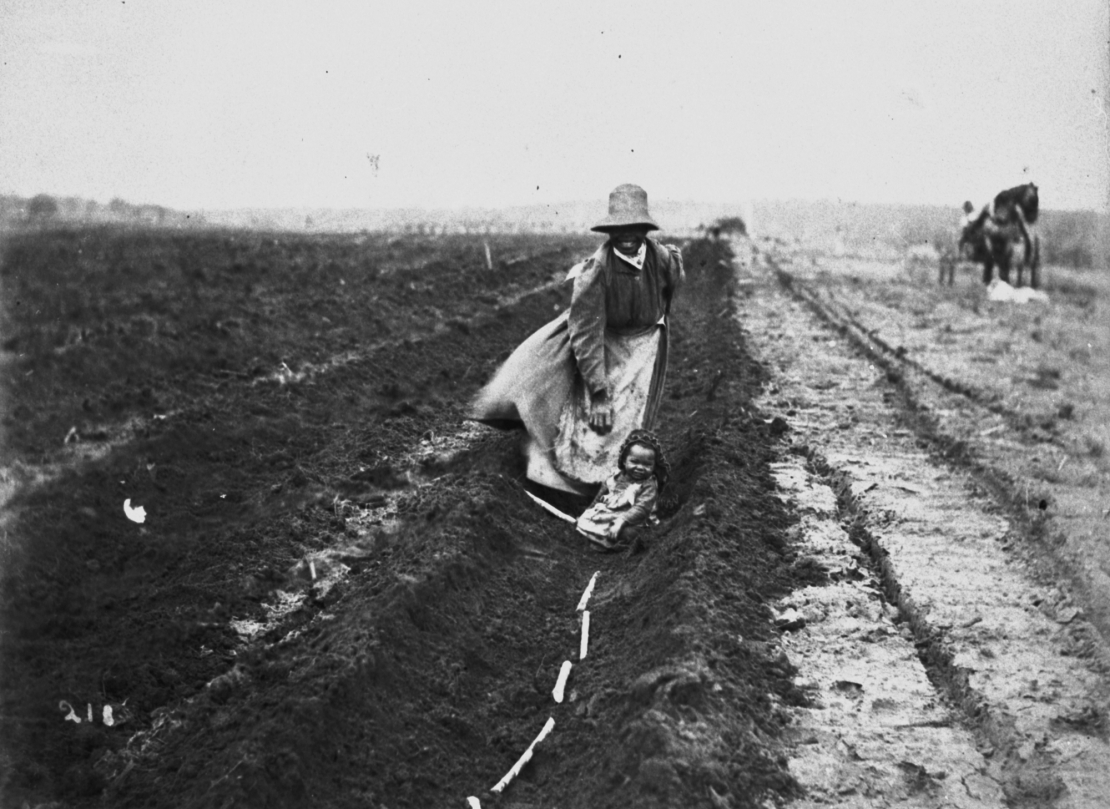 South Sea Islander woman planting sugar cane in a field 1897 Photographer unknown John Oxley Library State Library of Queensland Negative no 142325