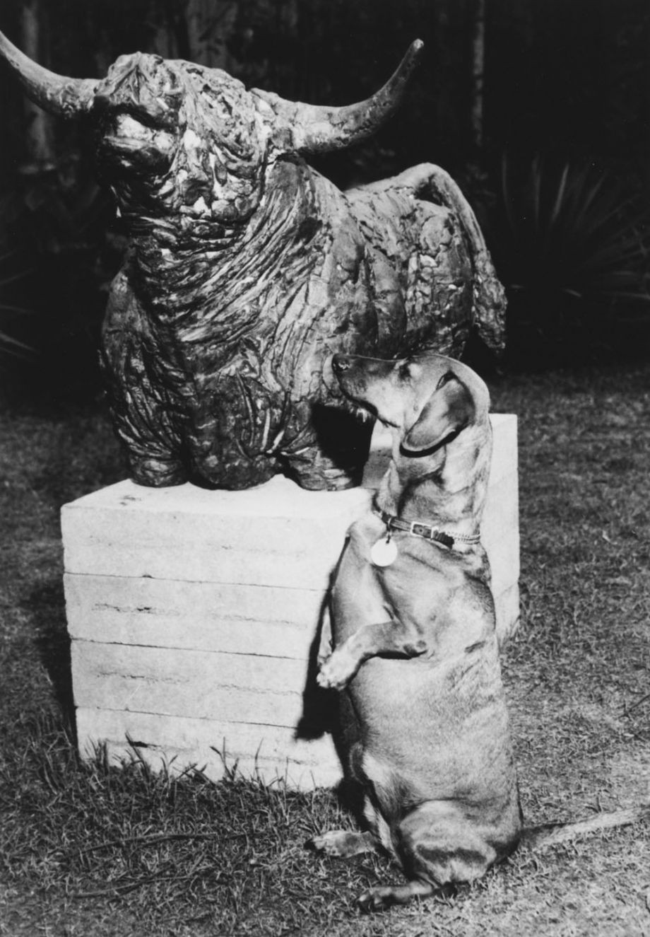 Lindy the Johnstone's dachshund with Bull by Kathleen Shillam in the garden of The Johnstone Gallery at Cintra Road, 1965