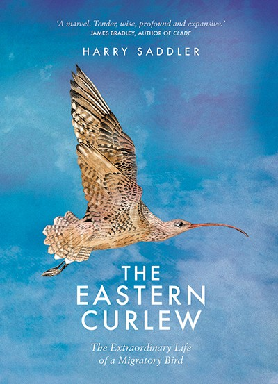 The Eastern Curlew by Harry Saddler Affirm
